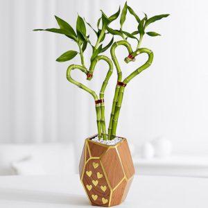 heart bamboo